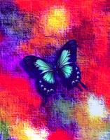 Blue Butterfly On Red Abstract