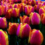 """Tulips 1 Digital Painting"" by gopnw"