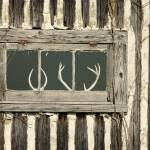 """Deer Antlers in Window Frame"" by beckybarnhardt"