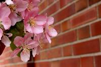 Pink Flower Blossoms and Brick