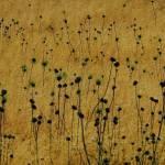 """""""Rhode Island Field"""" by bavosiphotoart"""