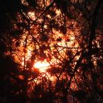 """sunset through branches"" by artfilmusic"