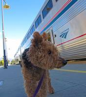 Maggie meets the train