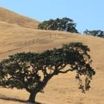 """""""California Hillside"""" by mojorider2"""