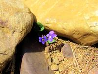 Purple Flowers Surrounded by Stones