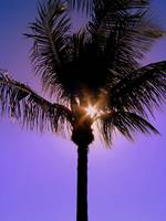 Palm Tree in the Sunlight