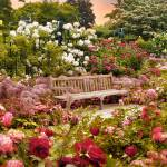 """Rose Garden Sunset"" by JessicaJenney"