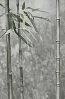 Whispery Bamboo Stalks