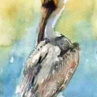 """Pelican bird art, Pelican Brief"" by schulmanart"