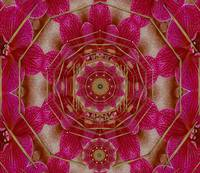 The Sacred Orchid Hippie Mandala
