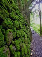 Moss-covered Rock Wall