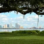 """Tampa Skyline through Old Oak"" by Groecar"