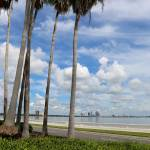 """Palms on Bayshore"" by Groecar"