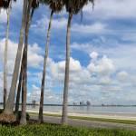 """Palms on Bayshore"" by Groecar"