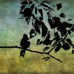 """Hummingbird Grunge"" by angelandspot"