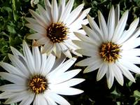 3 daisies expressive