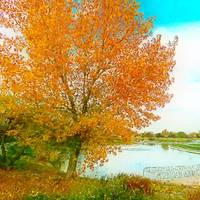 autumn tree and pond