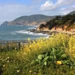 """California Wildflowers and Coastline"" by Groecar"