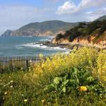 """California Wildflowers and Coastline"" by Groecar"