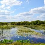 """marsh"" by bawhiddon1"
