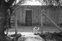 Watch dog at Adobe house, San Juan, Argentina