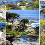 """California Coast Collage"" by Groecar"