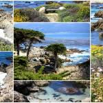 """""""California Coast Collage"""" by Groecar"""