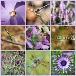 """Purple Flowers and Dragonflies Collage"" by Groecar"