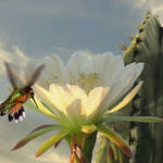"""""""Hummingbird and Cactus"""" by spadecaller"""