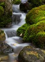 Moss Covered Tributary