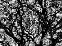 001 - ABSTRACT TREES, #1, VOL 2, EDIT D