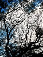 002 - ABSTRACT TREES, #2, EDIT C