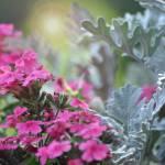 """Floral arrangment"" by Spyder13x085"
