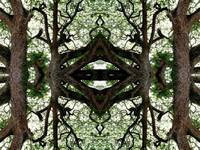 004 - ABSTRACT TREES, #4, EDIT D