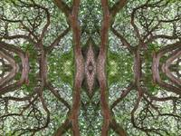 005 - ABSTRACT TREES, #5, EDIT D