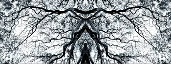 007 - ABSTRACT TREES, #7, EDIT E