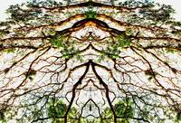 008 - ABSTRACT TREES, #8, EDIT E