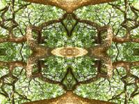 009 - ABSTRACT TREES, #9, EDIT E