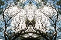 010 - ABSTRACT TREES, #10, EDIT D