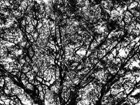 011 - ABSTRACT TREES, #11, EDIT D