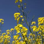 """20130606-Yellow & Blue"" by Machin"