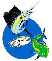 Sailfish dorado dolphin fish and yellow fin tuna