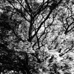 """012 - ABSTRACT TREES, #12, EDIT C"" by nawfalnur"
