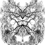 """018 - ABSTRACT TREES, #18, EDIT D"" by nawfalnur"