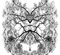 018 - ABSTRACT TREES, #18, EDIT D