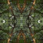 """""""023 - ABSTRACT TREES, #23, EDIT E"""" by nawfalnur"""