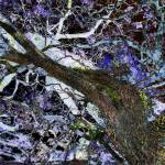 """""""024 - ABSTRACT TREES, #24, EDIT E"""" by nawfalnur"""