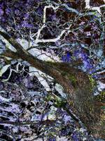 024 - ABSTRACT TREES, #24, EDIT E