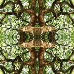 """""""027 - ABSTRACT TREES, #27, EDIT E"""" by nawfalnur"""