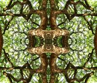 027 - ABSTRACT TREES, #27, EDIT E